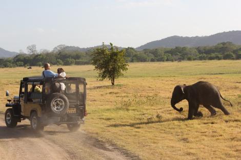 Ataque del elefante en Sri Lanka
