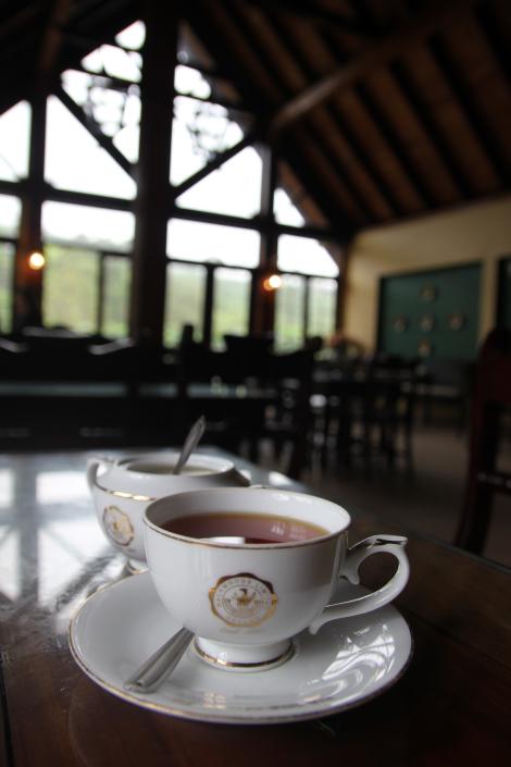 La celebración del té en Nuwara Eliya