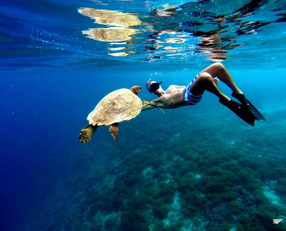 Esnórquel tortugas Indonesia