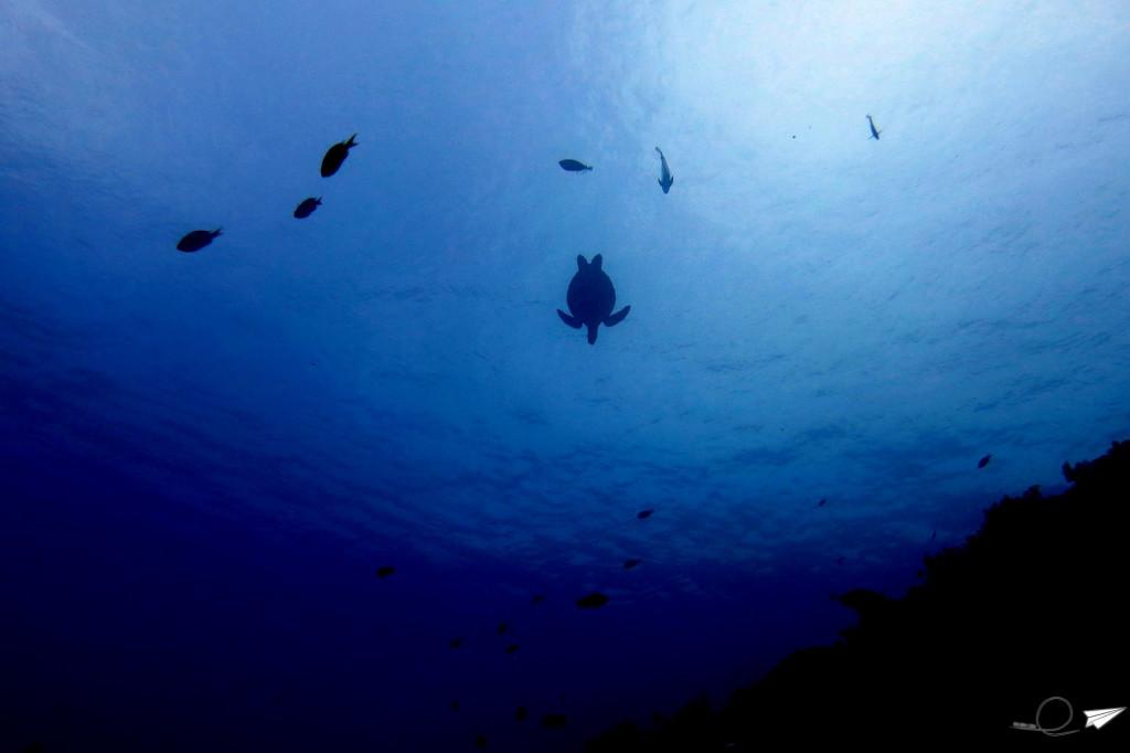 buceando-con-tortugas-balicasag