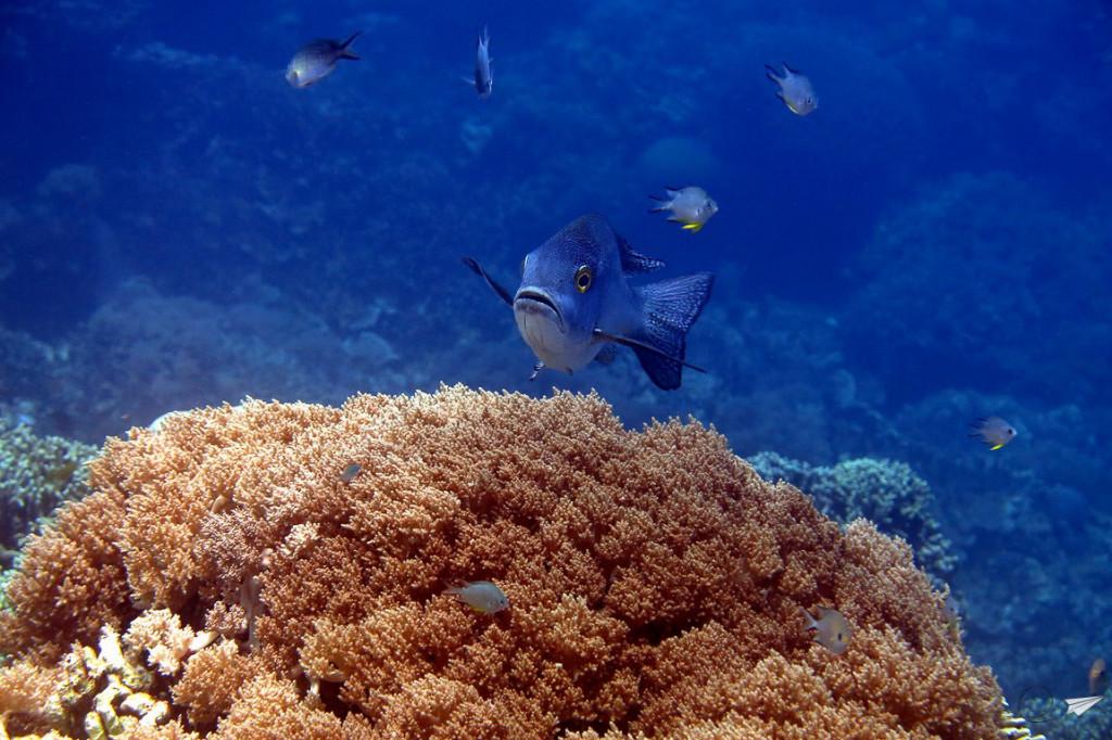Apo Island buceo