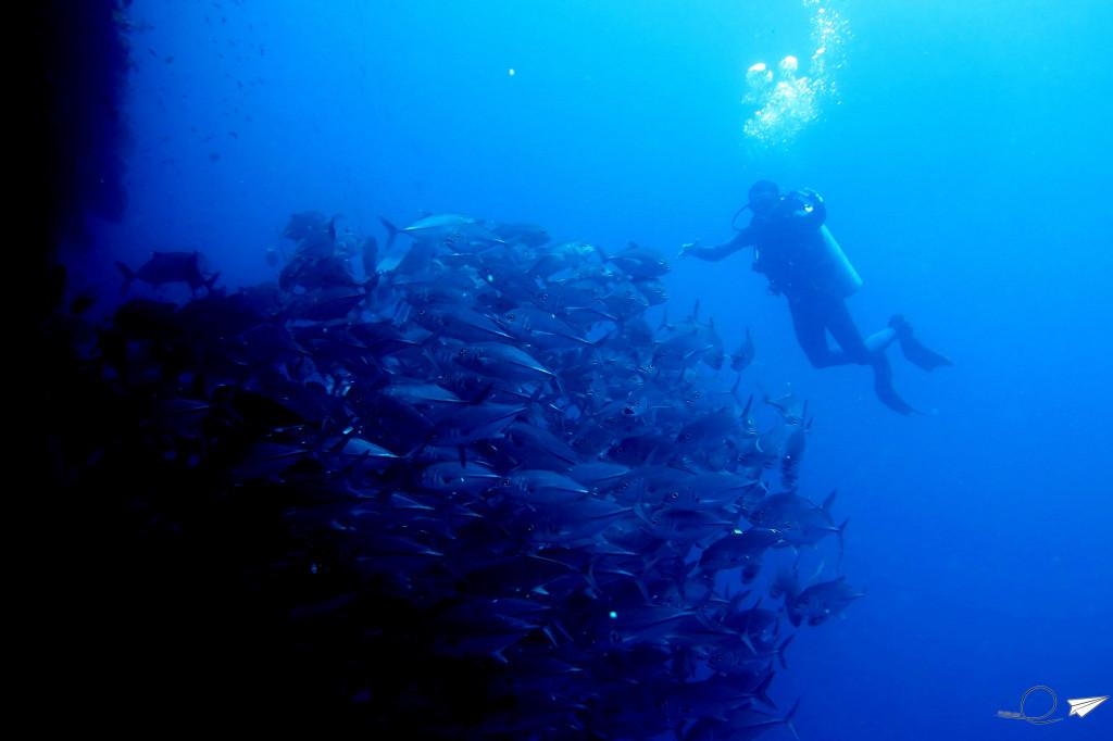 banco-peces-filipinas