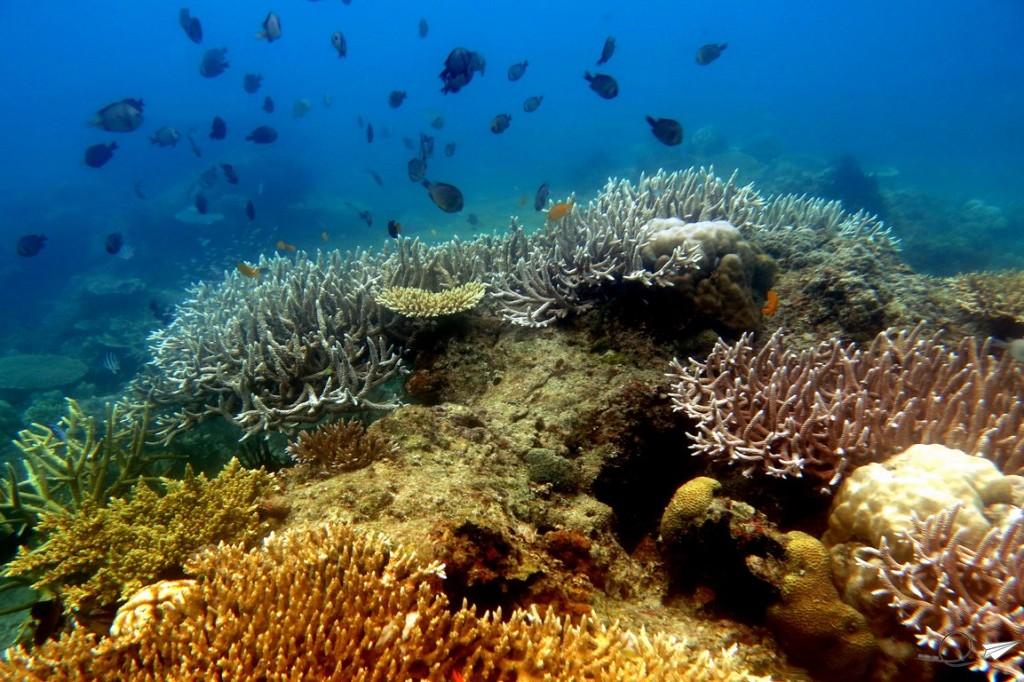 corales-buceo-filipinas
