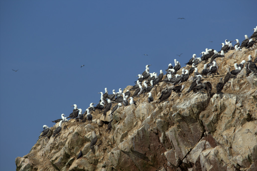 islas-ballestas.CR2