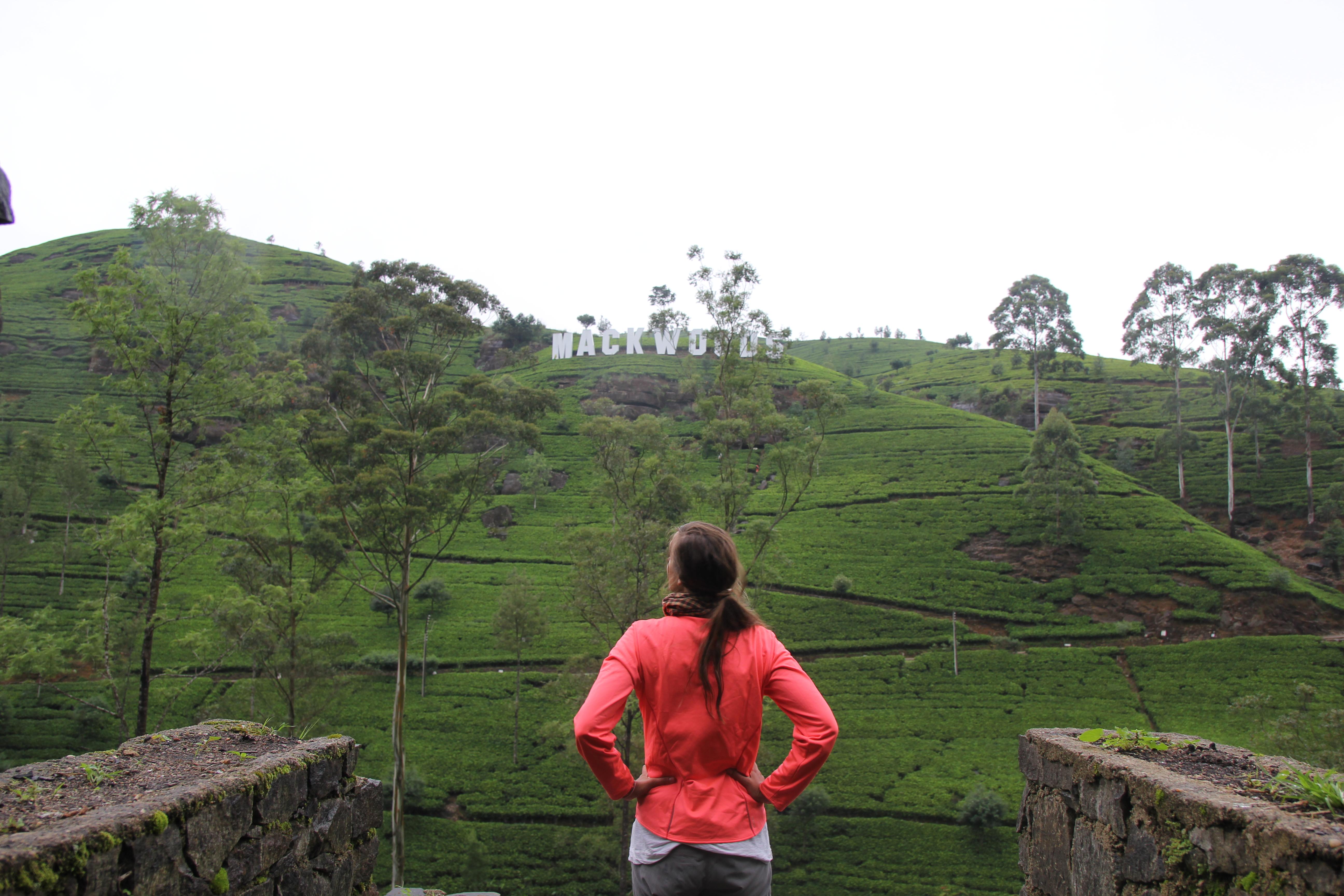 Las plantaciones de té de Nuwara Eliya
