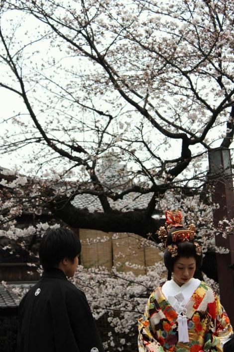 Cerezos en flor Japón