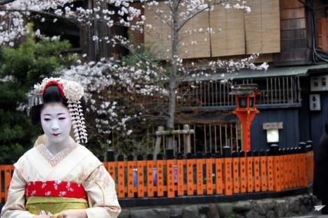 Cerezos en flor Kioto