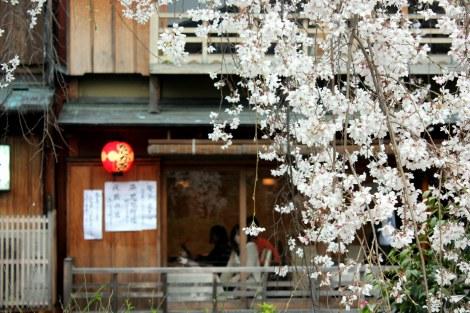Cerezos en flor Kyoto