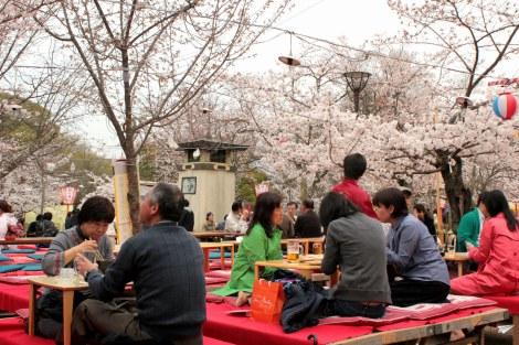 Hanami parques Japón