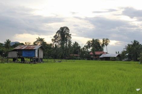 Arrozales 4000 Islas Laos