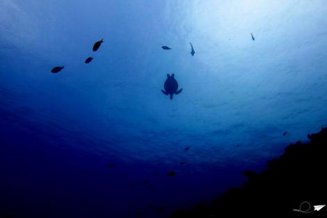 Buceando con tortugas Balicasag