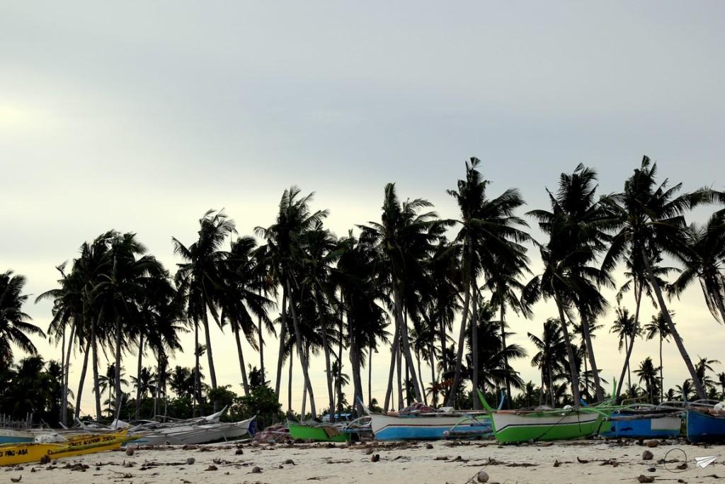 Atardecer palmeras Bantayan