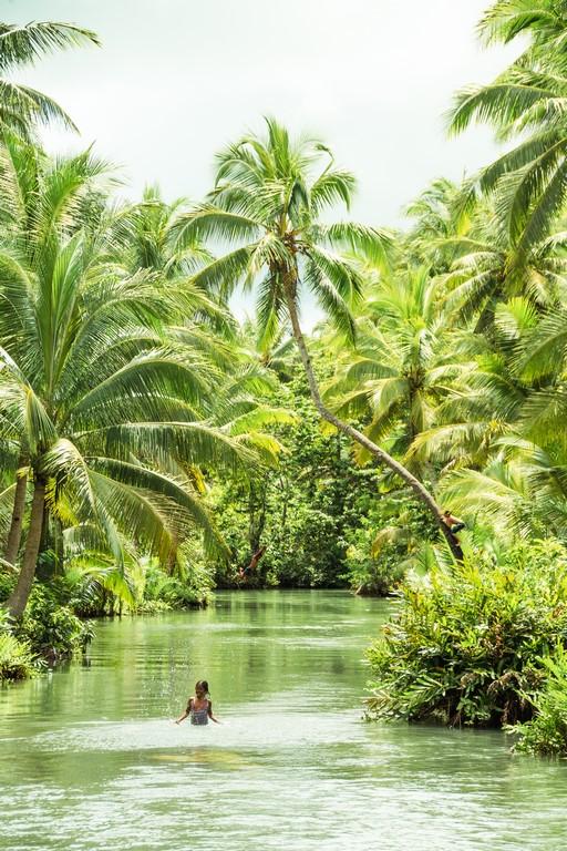 palmerales en siargao