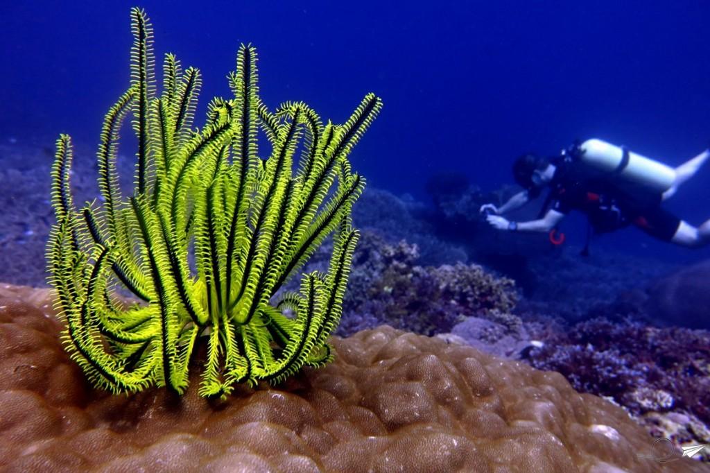 coral-filipinas-buceo