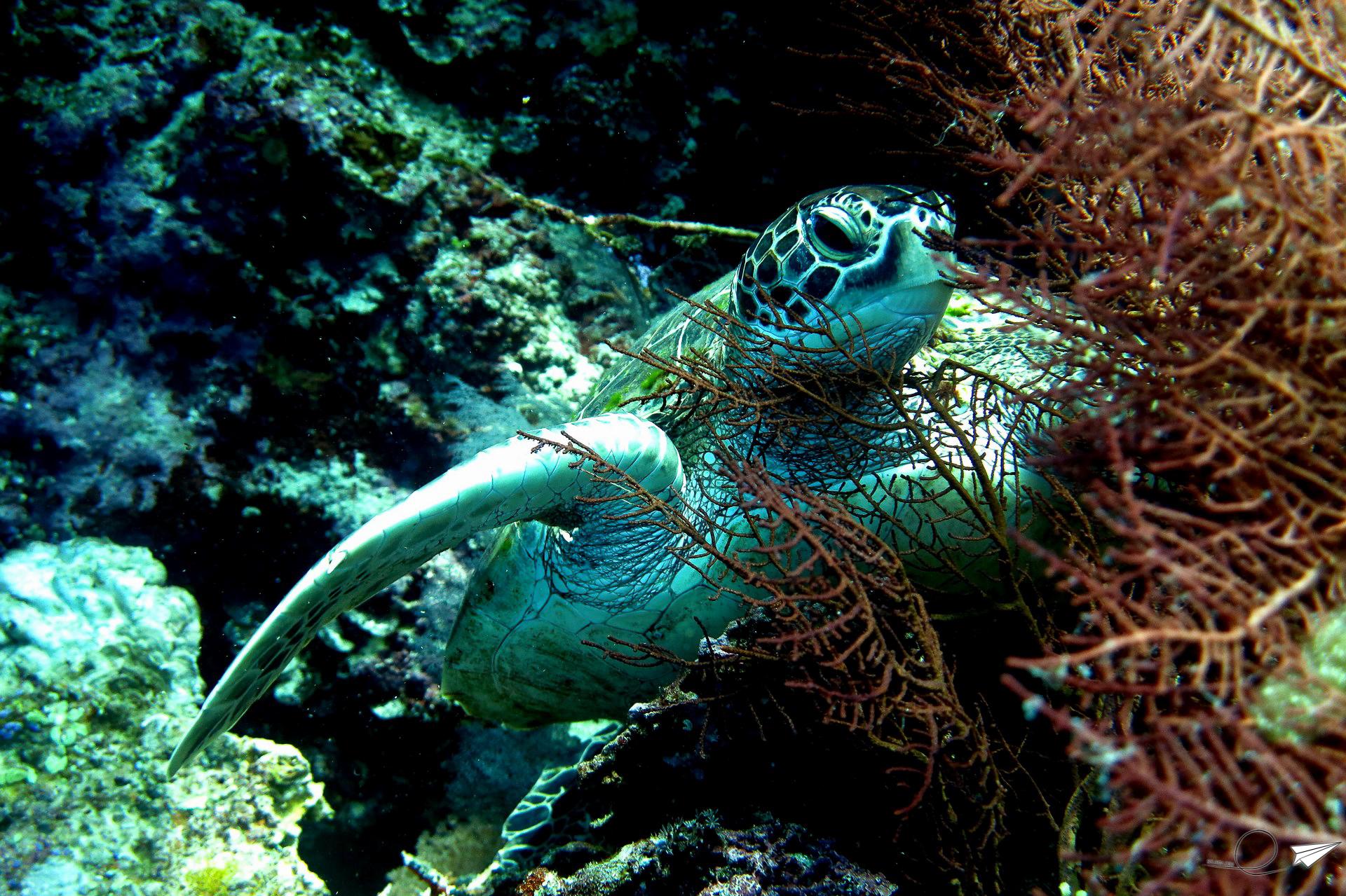 Filipinas bajo el mar, un paraíso para bucear