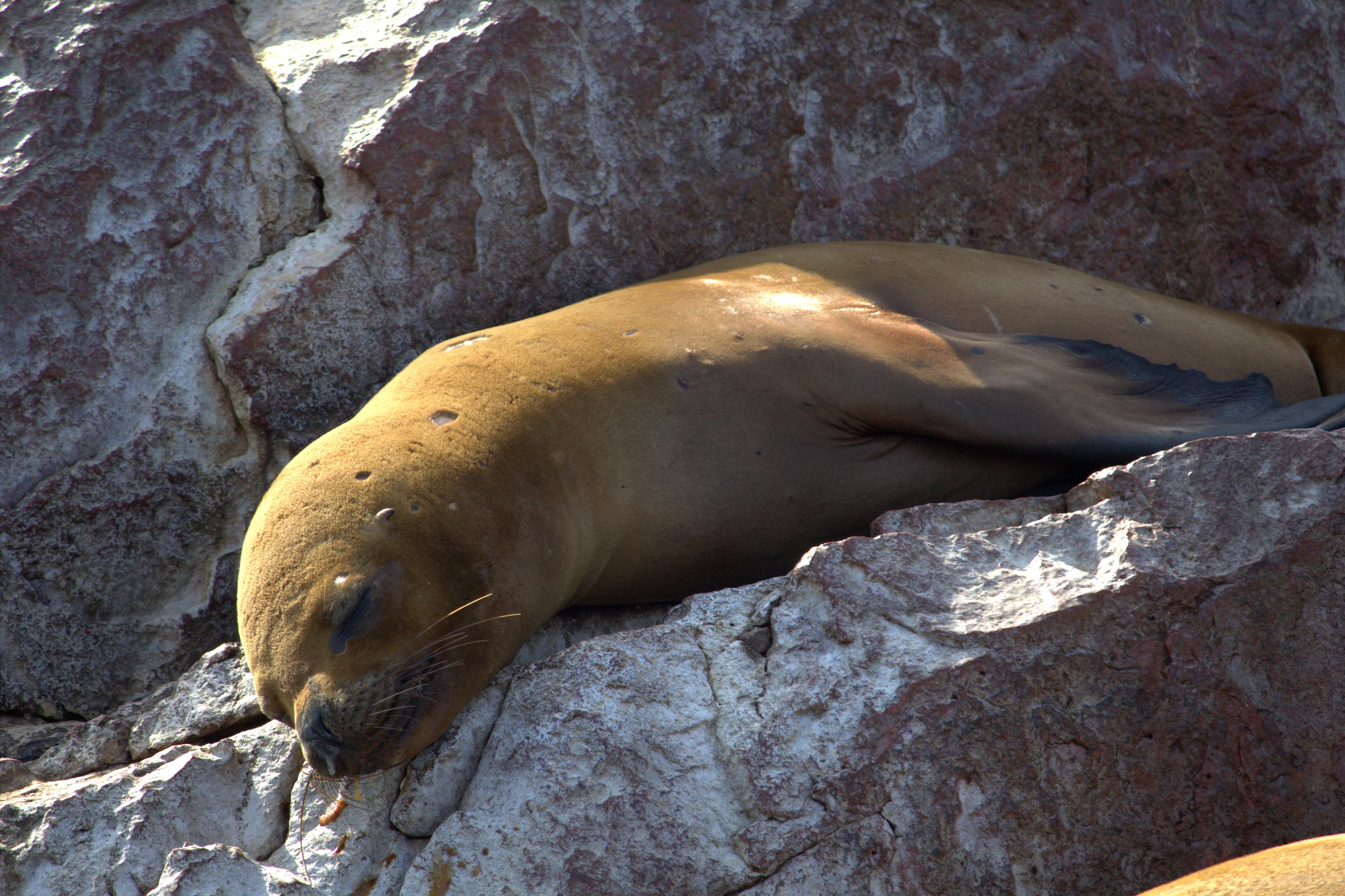 Paladeando Perú: Paracas y las Islas Ballestas