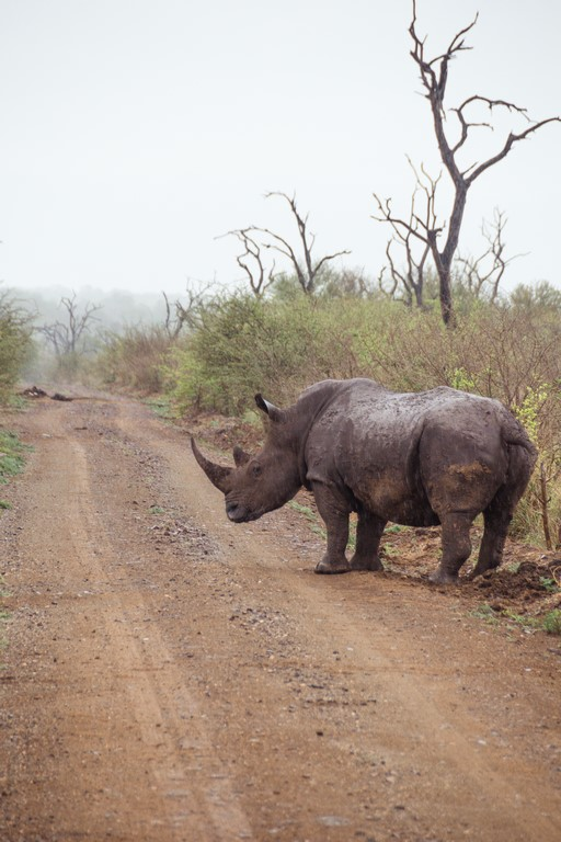 moverte en coche por Sudáfrica