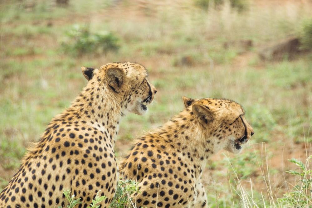 Nuestro épico viaje a Sudáfrica – Datos prácticos para viajar a Sudáfrica